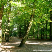 A picture of the park in which you can find the Monument to Shared Memory and also where the German Cemeteries would have been had they not been completely destroyed.