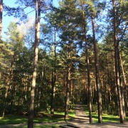 The forest at Panarei