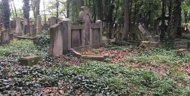 Exhibit 1. The New Jewish Cemetery. Field 6. June 6, 2017.